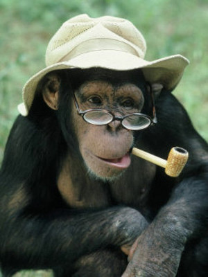 Smoking_monkeys_05